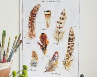 Pheasant Feathers Print