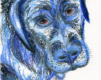 BLU the ENGLISH LAB Pastel Free Hand Impressionist Pets!