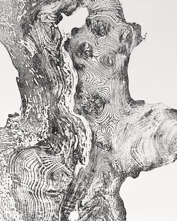 California Redwood tree ring print, Redwood tree rings, Handmade print, Oversized tree ring Art, Real redwood tree, Nature inspired tree art
