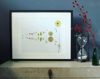 Limited edition Botanical art Glicee print/botany/Nature print/wall art/Interior artwork/floral print/Australian artist/emerging artist