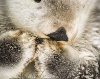 Fluffy Sea Otter Portrait Photo Print