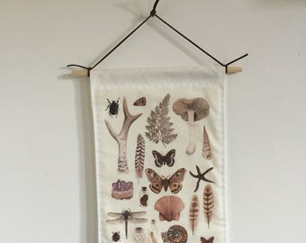 Natural History Collection wall hanging
