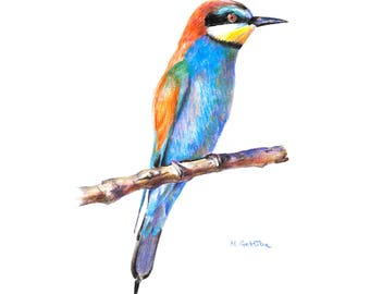 European bee-eater Fine Art PRINT, Giclée Print Of A Color Pencil Drawing Of Exotic Merops Apiaster, Bird Illustration, Cottage Wall Art