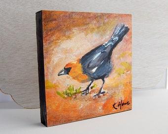 Blackbird Print 6x6 on Wood Block Ready-to-Hang Yellow-headed Blackbird Bird Art from Original Acrylic Painting