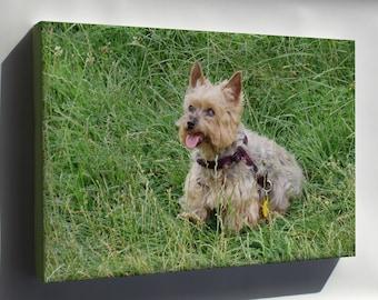 Canvas 24x36; Yorkshire Terrier P3