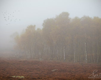 Autumn print, landscape photography, trees, minimalist, woodland, misty trees, nature photography, fine art photography, framed print, fall