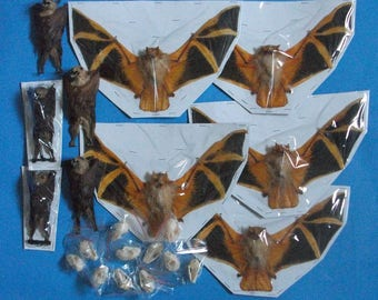 Taxidermy Mix fruitbat bat,skull,hanging,spread Lots 45 pcs