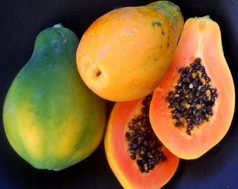 Sunrise Solo Hawaiian Papaya Seeds (Carica papaya) 15+ Rare Fruit Tree Seeds in Frozen Seed Capsules™ plus FREE 6 Variety Seed Pack!