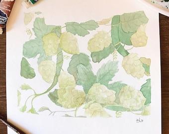 OREGON State Watercolor • Original Hop Vine Painting • 8x10