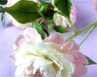 Peonies polymer clay Flowers cold porcelain flowers,interior arrangement,floral arrangement,interior bouquet,peonies handmade,clay flowers