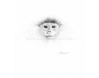 Monkey Head Original Drawing