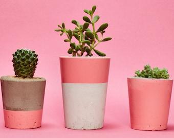 Concrete Planter, Cactus/ Succulent Plant Pot, Handmade, Pink, Small Size- Includes Cactus or Succulent