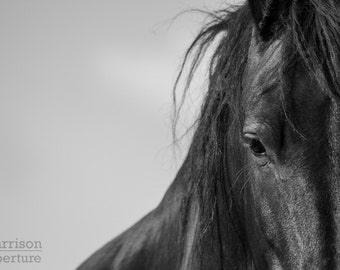The Friesian | Black and White Print