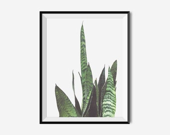 Botanical Print, PLANT PRINT, Botanical Art, Wall Art Prints, Art Prints, Botanical Decor, Botanical Wall Art, Bedroom Wall Art, Green