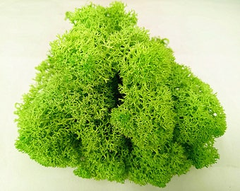Spring Green Moss Preserved Lime Reindeer Moss Moss For Glass Dome Jewelry Findings DIY Terrarium Accessories Gardening