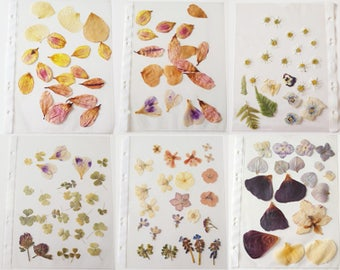 Collection, convolute dried flowers and blossoms. To the craft, decorating, etc.