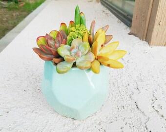 Aqua blue turquoise modern geometric pot with living succulents