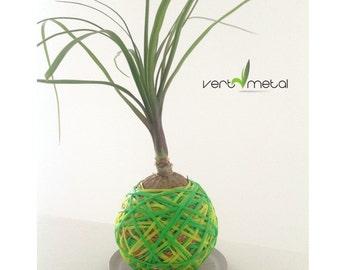 Yellow / green sphere plant kokedama style