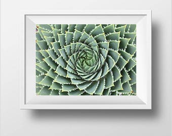 South African Aloe Etsy