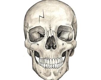 Harry Potter Skull