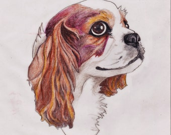 Custom Pencil Pet Portrait