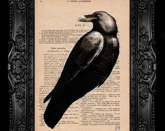 Crow. Nº 12. Pencil and ink drawing on page of French publication of the 1930 illustration. The measurement of the leaf is 28 x 19 cm.
