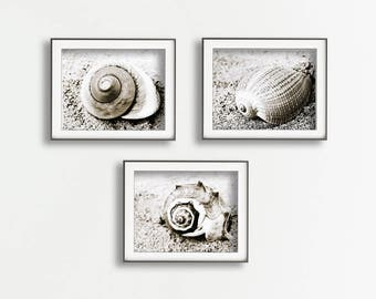 Seashell Print Set, Sea Shell Sepia, Nautical Life Print, Coastal Photography, Nautical Print, Coastal Print, Coastal Wall Art Seashell Art,