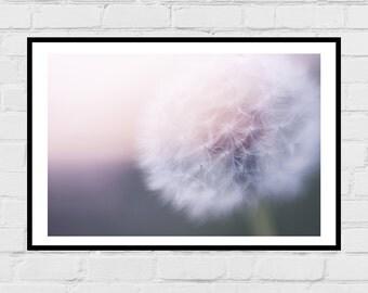 Dandelion digital photo print - garden, dreamy print, digital download, home decor