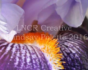 Purple Iris Photo Unframed, Iris Print, Flowers, Fine Art Photograph, Garden Print, Spring Flowers, Nature Photography