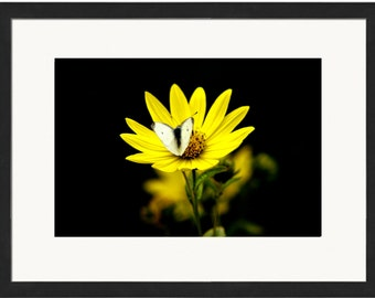 Framed & Mounted Butterfly, Giclee, fine art photography print, Limited edition of 150!