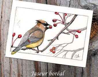 Package of 10 identical cards - winter birds