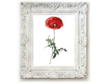 Poppy Flower Illustration Print, Giclee Print, Wall Art, Watercolor Print, Illustration, Flower Illustration.