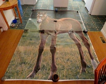 Very large foal poster in 4 pieces