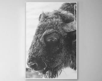 Buffalo Bison, Buffalo Print, Buffalo Decor, Buffalo Art, Buffalo Wall Art, Bison Art, Bison Print, Bison Wall Art, 220