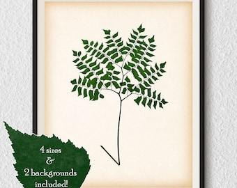 Digital print, Botanical wall art, Print download, Home wall decor, Fern print, Antique botanical print, Botanical illustration vintage, #83