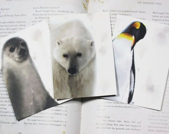 Three Winter Animals Postcards