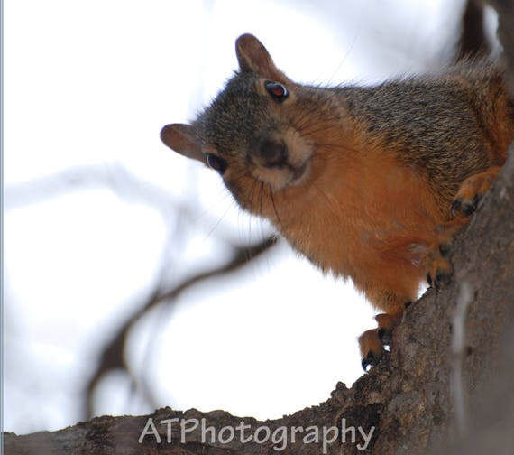 A cute Tree Squirrel expression makes funny birthday card
