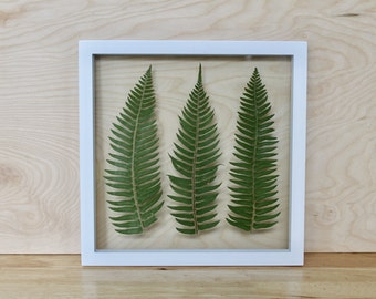 Modern Botanical Art | Framed Pressed Plants | Green Gallery Wall Art | Northwest Home Decor | Contemporary Fern Art | Mixed Media Wall Art