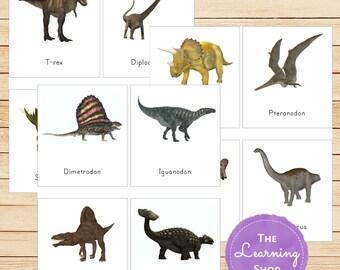 Montessori Dinosaur 3 Part Cards