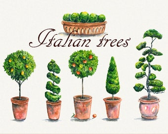 Tree clipart, italian clipart, garden clipart, lemon Tree, Orange tree, Hand Painted, clip art, digital watercolor