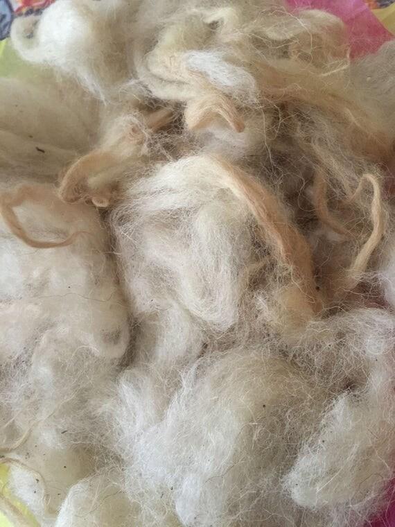 raw scottish blackface lamb fleece from flintstownfiber on