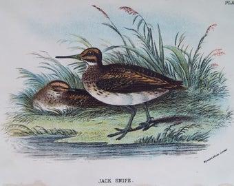 Birds-Jack Snipe Vintage bookplate- dated 1880 12cm x 18cm