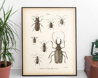 8x10, 11x14 Entomology print, Beetle print, Natural History Print, Antique insect art, Insect printable, Printable downloads, Digital print