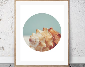 Sea Shell Photograph, Coastal Decor, Digital Download, Circle Art, Beach Photography