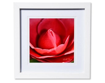 Red Rose Petals Photo Print or Canvas