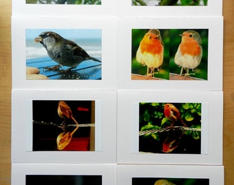 Marvellous Mr. Robin pack of 5 cards