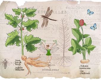 Mandragora botanical printable, herbarium wall art, vintage botanical prints, plant prints, insect art, nature wall art, collage print