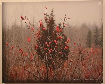 Red Berries 3