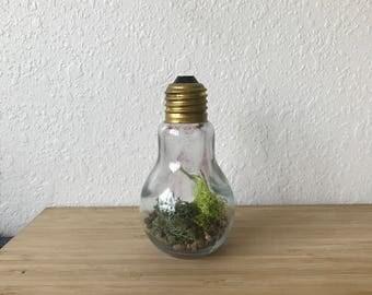 Lightbulb Nature Inspired Terrarium Home Decor - House Warming Gift - Modern Terrarium