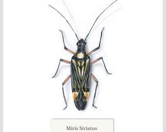 Miris Striatus - Print - Original Acrylic Painting - 15.6 x 15.6cm